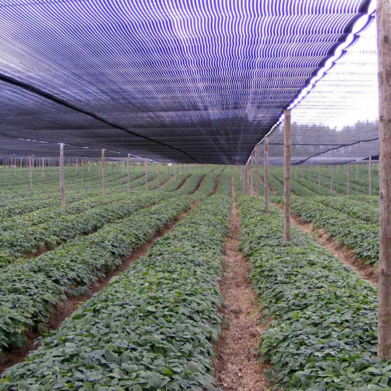 Mallas Raschel para Agricolas
